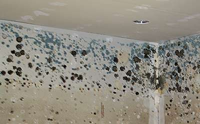 Mold Assessments And Nys Mold Law Bergami Building
